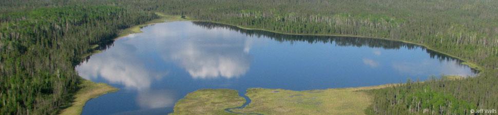 Canada's Boreal Forest: Ontario